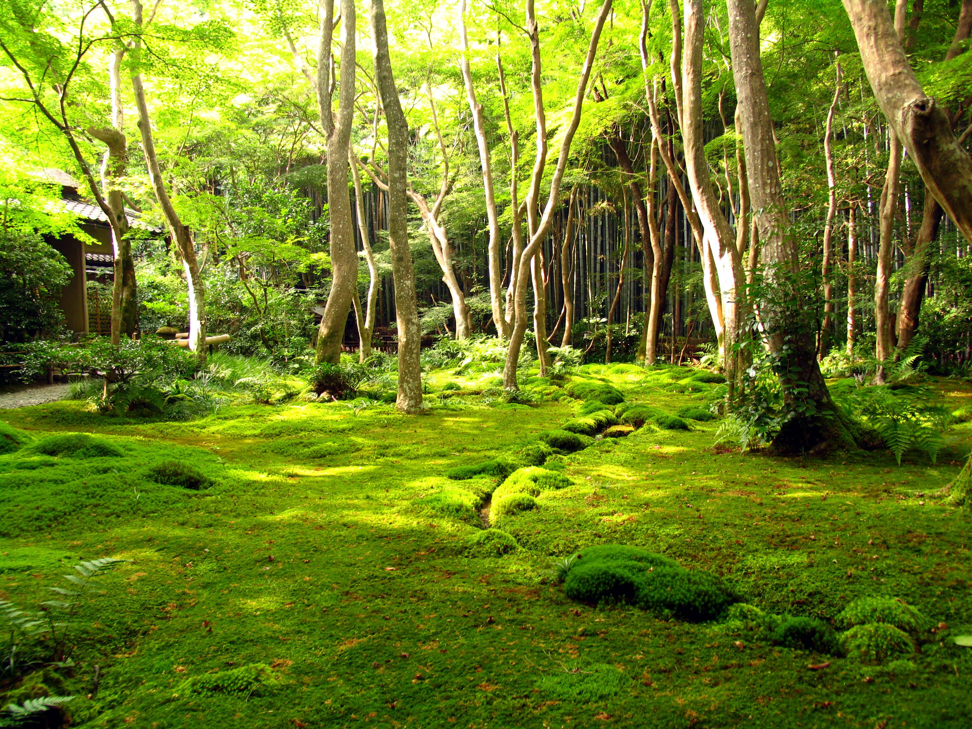 Aller kyoto pour un jardin de mousse fais toi la belle for Jardin kyoto