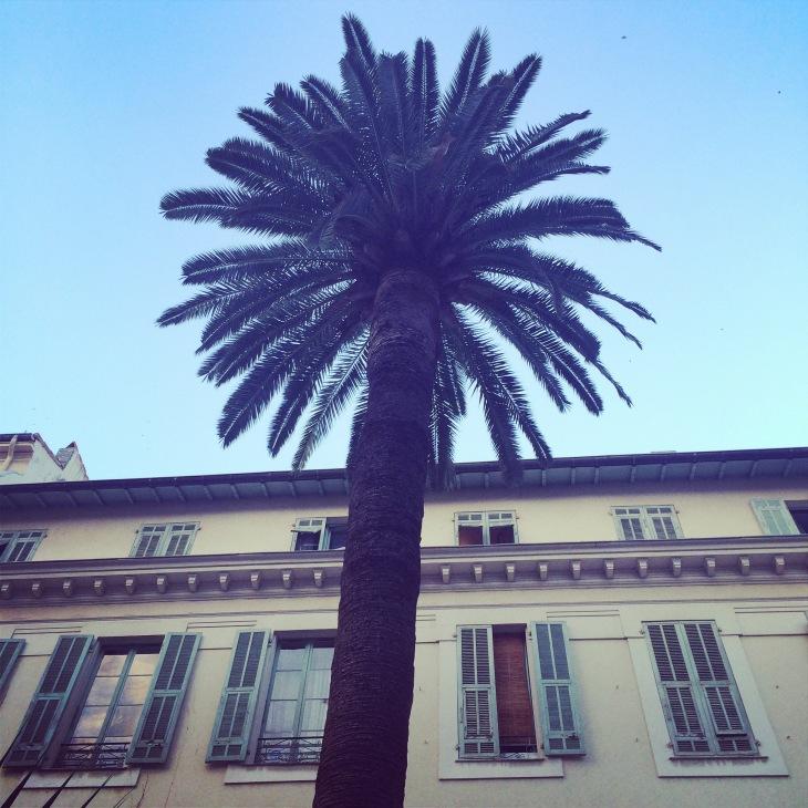 Nice palmier
