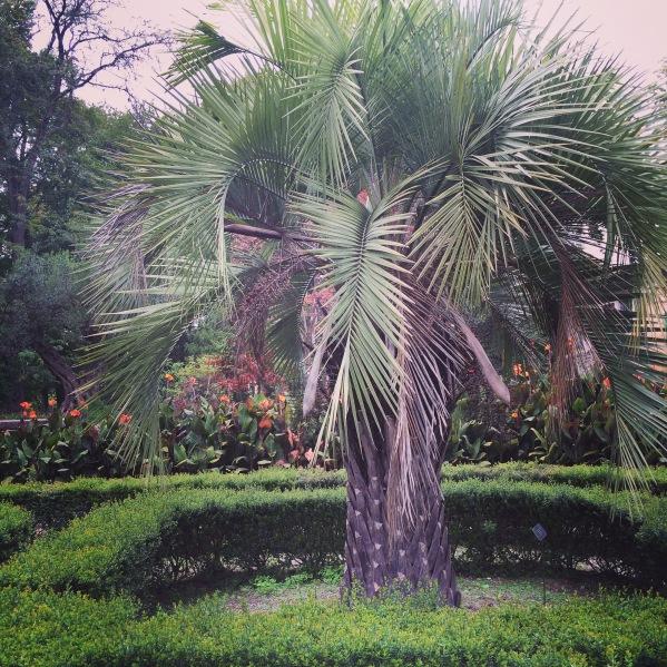 jardin des plantes montpellier