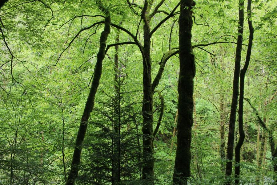 La nature exubérante en FrancheComté