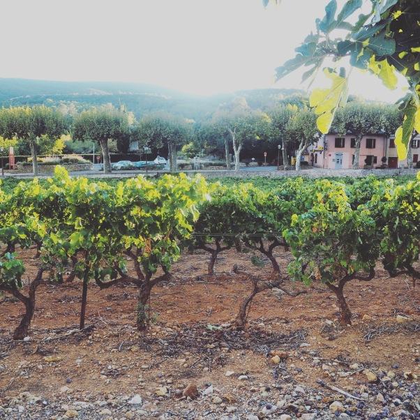 vignes dans le Var