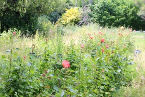 Jardin bio jean Rey chez Jany Gleize La Bonne Etape