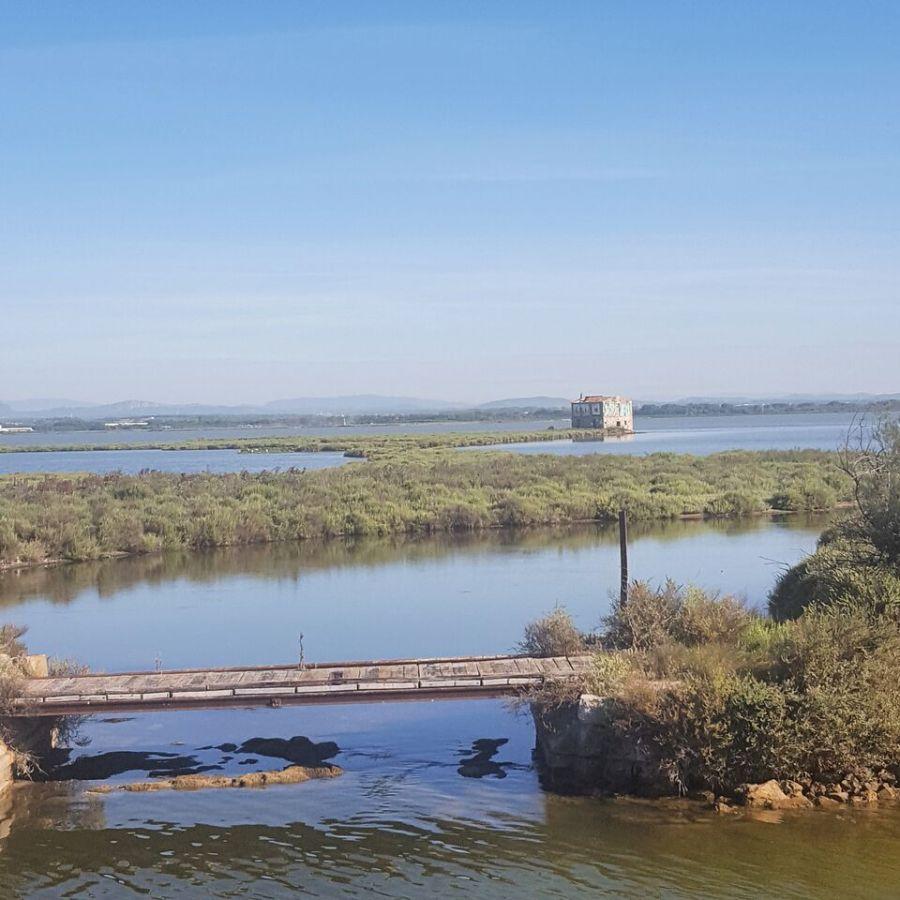 Une croisière fluviale enCamargue