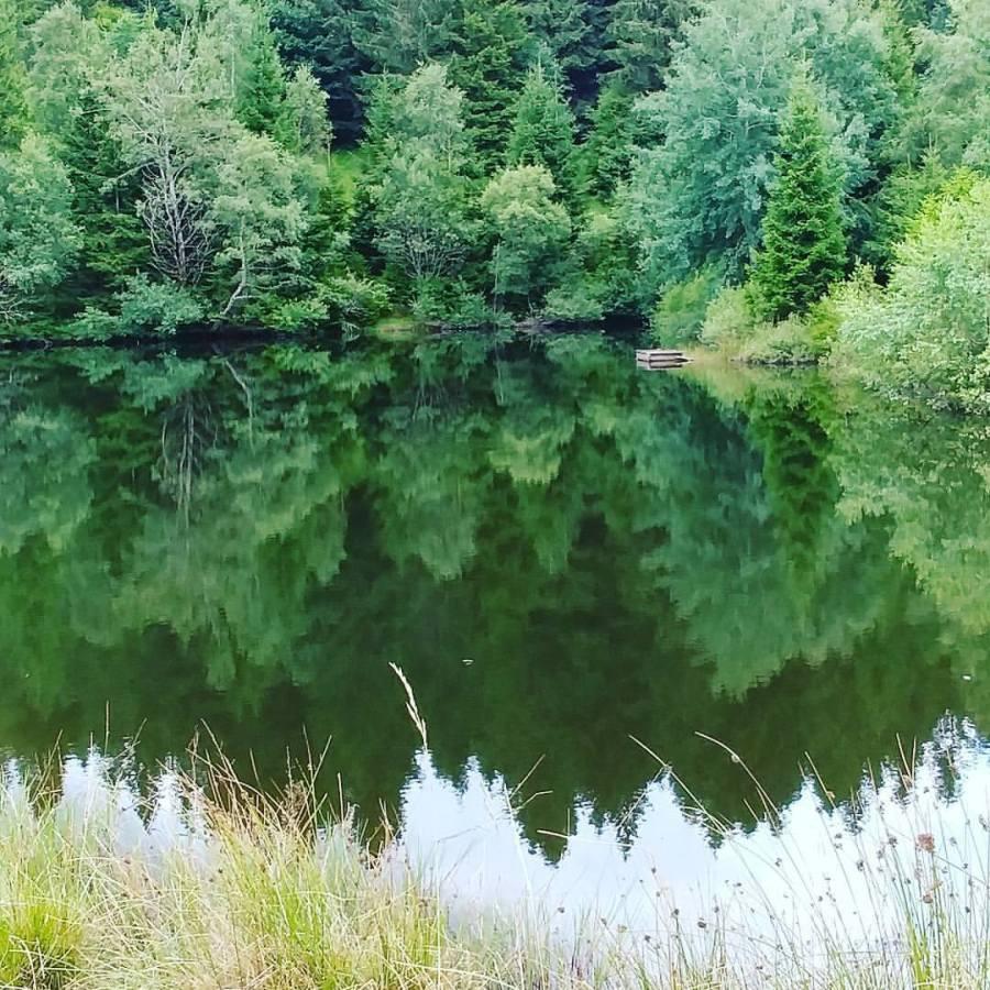 Hautes-Vosges, splendide nature